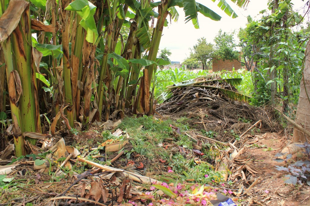 Compost heap at Mr Garwe's home. A prime example for our land at the community centre.